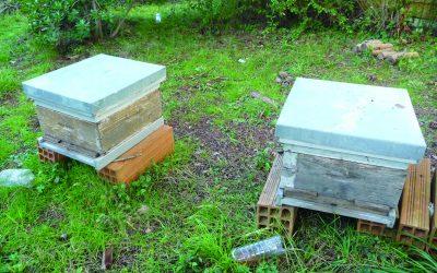 Cenon : potagers, arbres fruitiers et ruches au collège Jean Zay. Des élèves motivés !